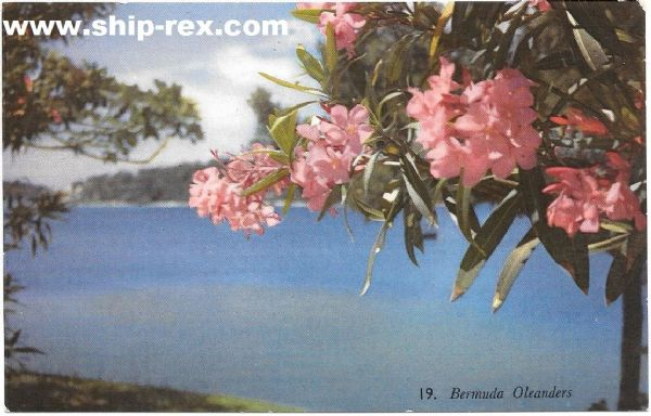 Oleanders on Bermuda - postcard